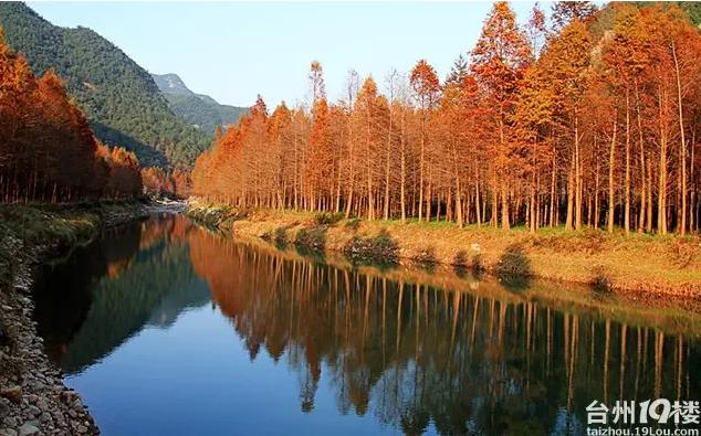 12月5号临海小芝环线徒步摄影走起(赏最美3片红水杉)