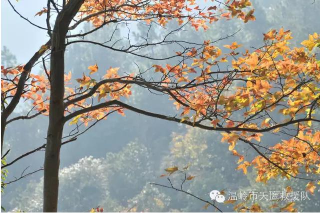 刘基古里文成大会岭红枫古道赏枫摄影爬山活动