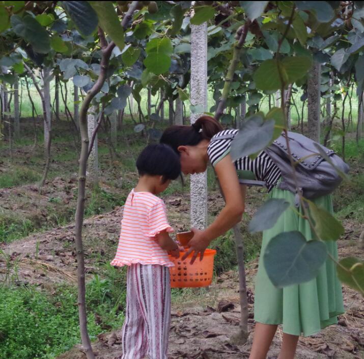 青年卡会员采摘嘻哈果园红心猕猴桃活动