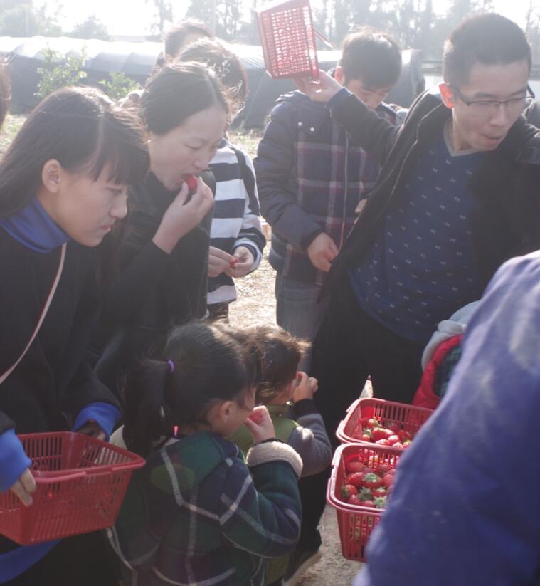 温岭新青年组织青年卡会员进行草莓采摘活动